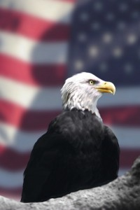 Eagle and American_Flag