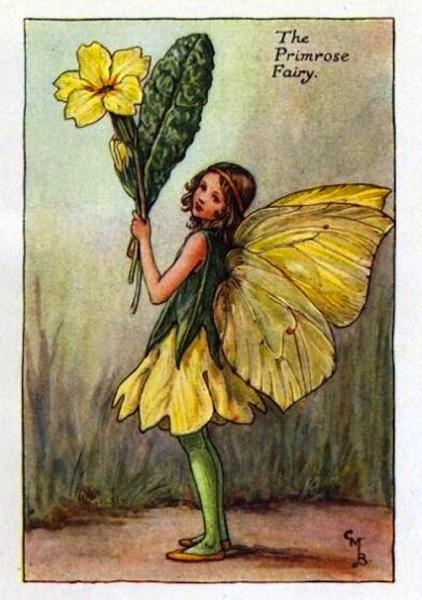 Primrose Flower Fairy Vintage Print